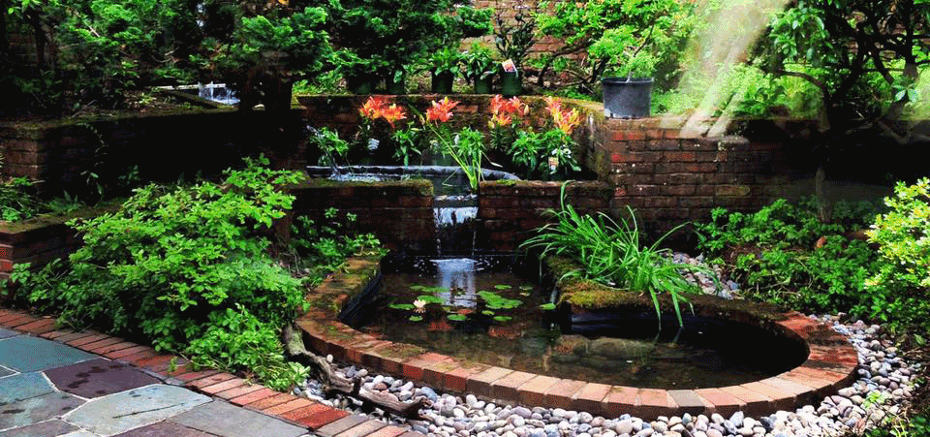 Pond maintenance water garden arlington va for Koi pond maintenance service